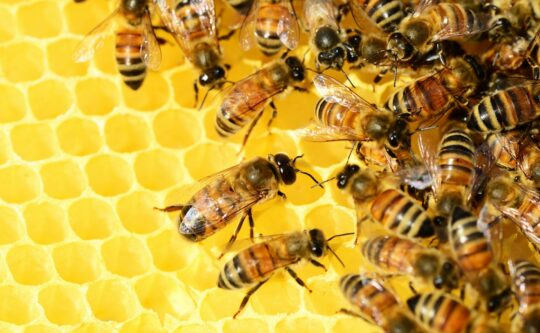 Środki ochrony roślin niebezpieczne dla pszczół